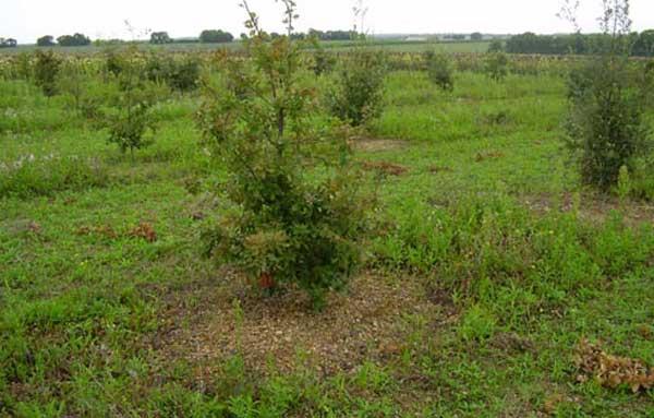 Дерево под которым растет трюфель