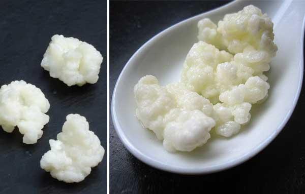 внешний вид молочного гриба