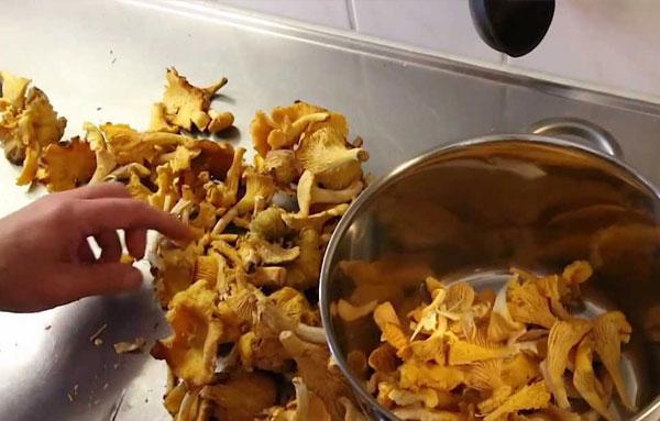 Подготовка лисичек к маринованию