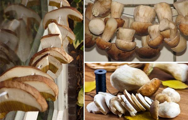 Сушить белые грибы на нитке