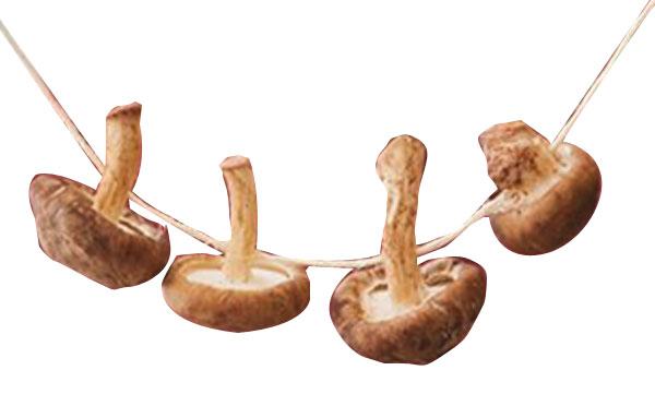 как правильно сушить грибы в домашних условиях на нитке