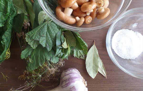 ингредиенты для соления волнушек