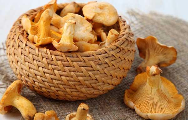 Свежие грибы лисички